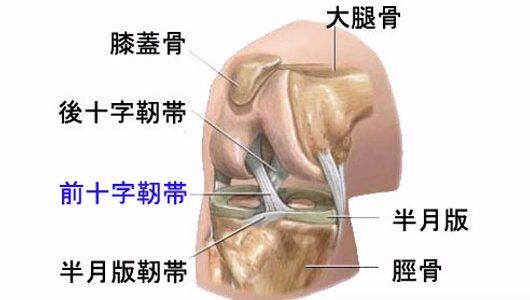 超音波エコー完備の他の整骨院で誤診された前十字靭帯損傷/断裂?